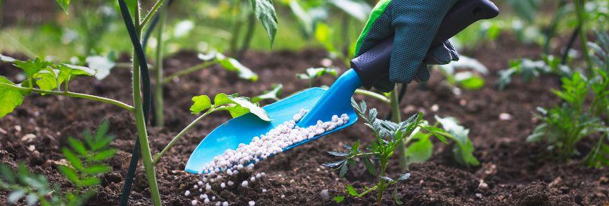 Uprawa i ochrona roślin