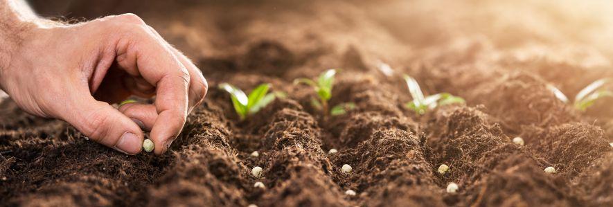 Nasiona i kiełki